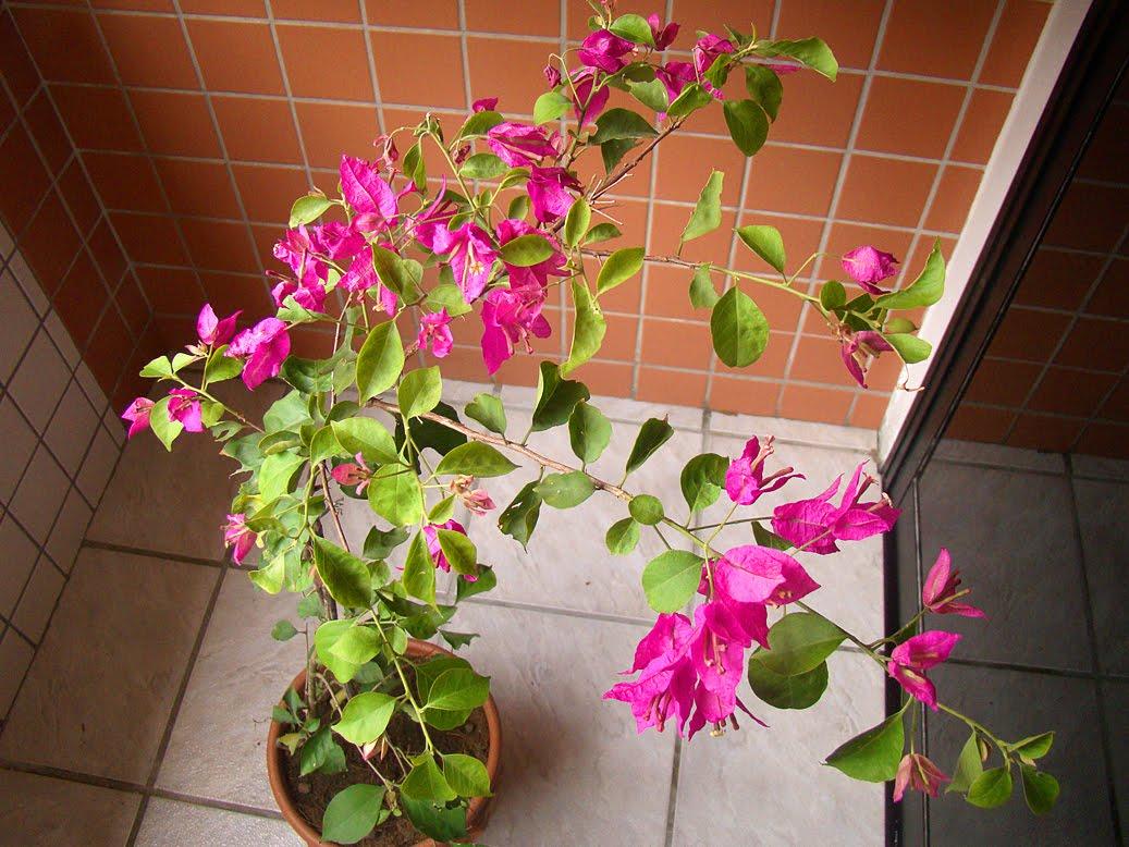 plantas jardim de sol : plantas jardim de sol:enquanto isso no jardim
