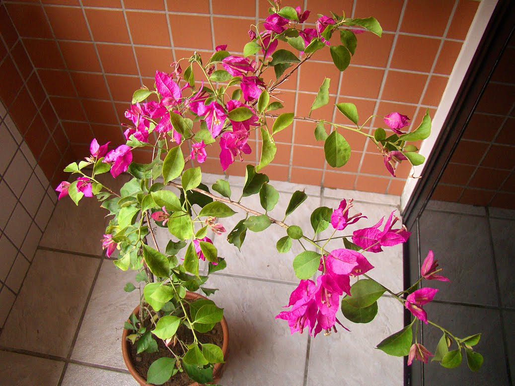plantas jardim de sol:enquanto isso no jardim